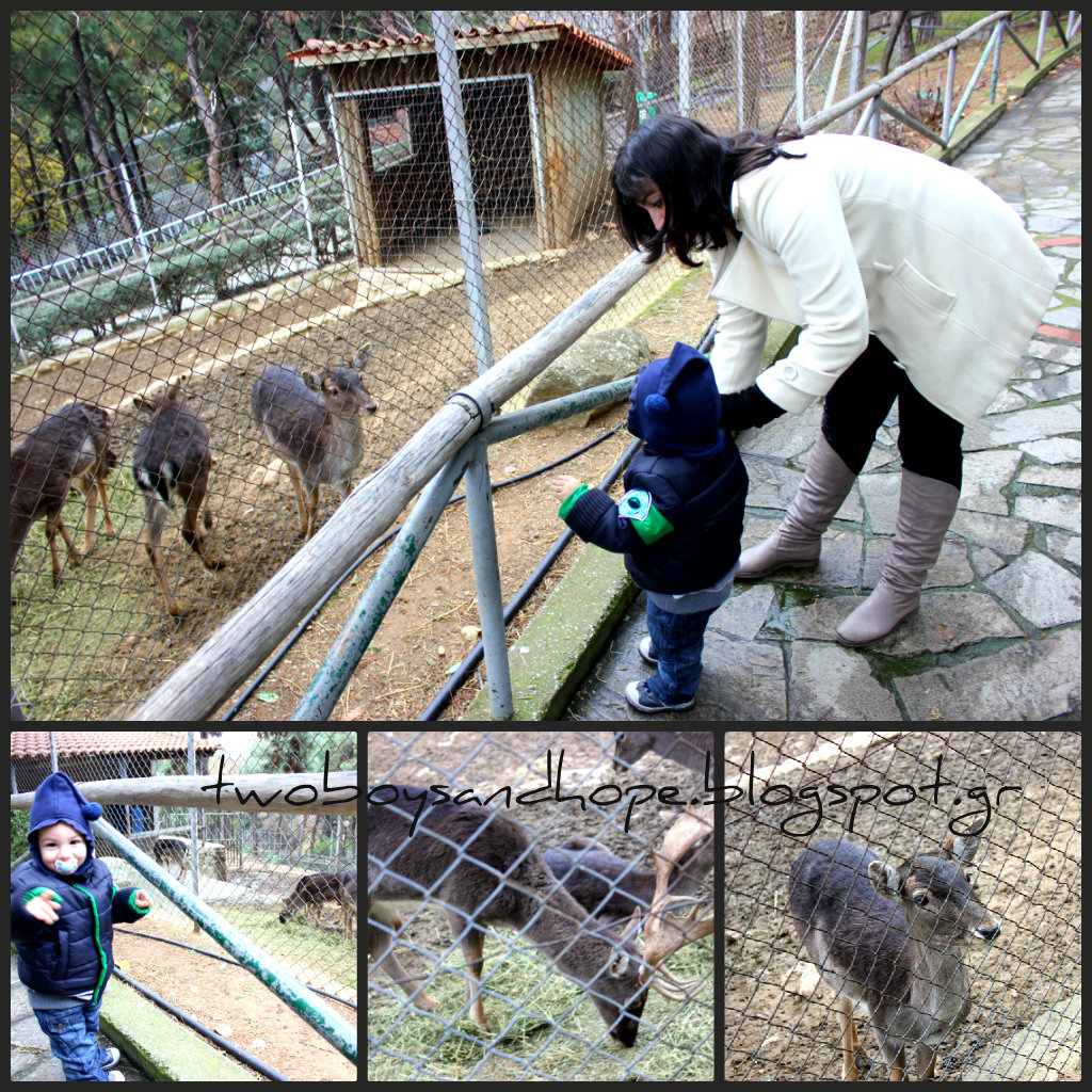 Στο ζωολογικό κήπο…